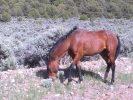 Wild Horse Mesa, horse grazing