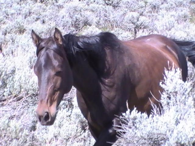 Wild Horse Mesa, horse in brush
